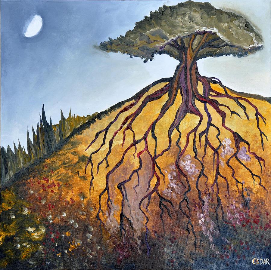 deep-roots-cedar-lee